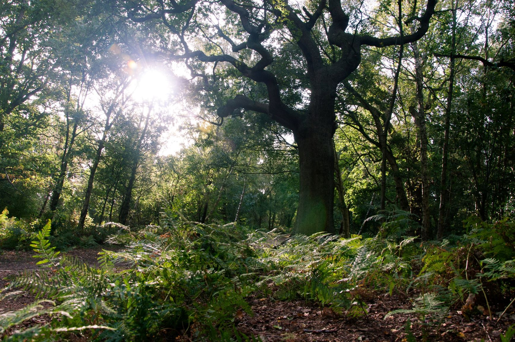 5-Year Management Plan for Surrey Hills Area of Outstanding Natural Beauty Adopted by Mole Valley District Council