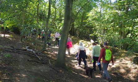 Walk at Tillingbourne
