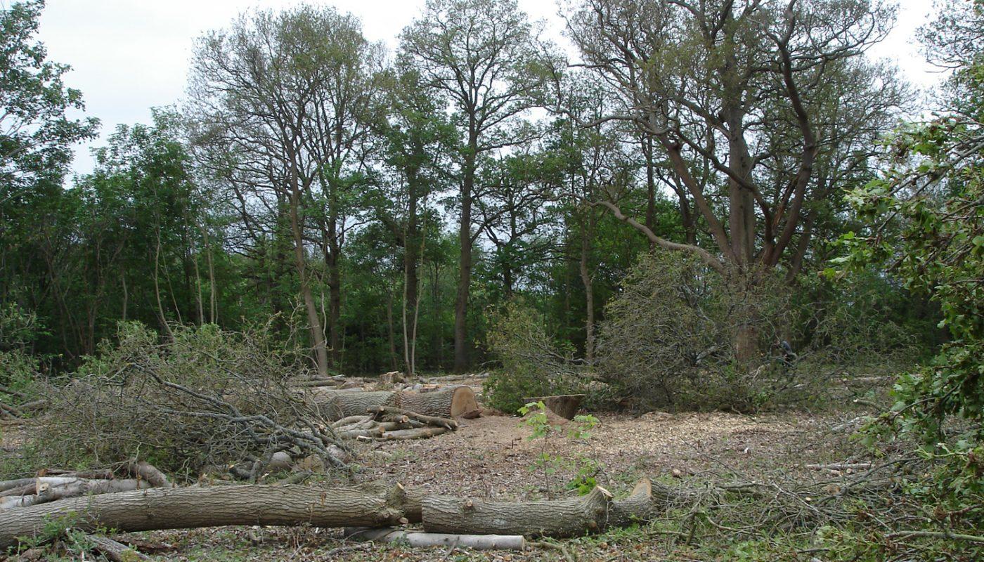 Teazle Wood, Leatherhead