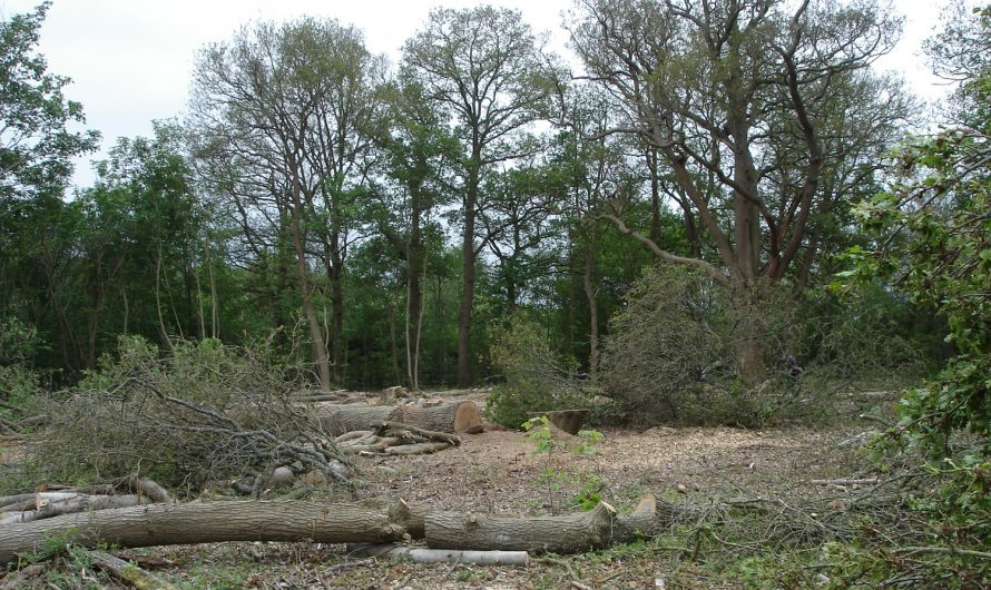 Charges Successfully Brought for Destruction of Woodland
